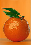 Tangerine. Fresh tangerine stock photo