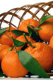 Tangerine. Basket full of fresh tangerines stock images