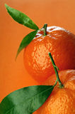 Tangerine. Pair of fresh tangerines against orange background royalty free stock photos
