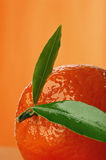 Tangerine. Fresh tangerine Royalty Free Stock Images