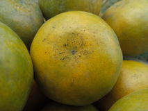 Tangerine Στοκ φωτογραφίες με δικαίωμα ελεύθερης χρήσης