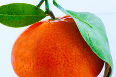 Tangerine Obraz Royalty Free