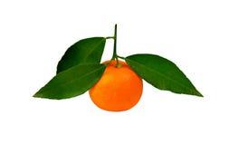 Tangerine Стоковые Изображения RF