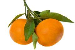 Tangerine Stockfoto