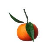Tangerine Obrazy Royalty Free