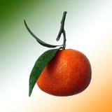 Tangerine Obrazy Stock