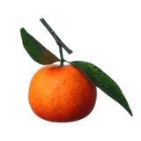 Tangerine Zdjęcia Royalty Free