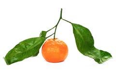 Tangerine, biały tło Zdjęcie Stock
