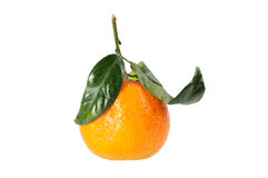 Tangerine on branch. Royalty Free Stock Images