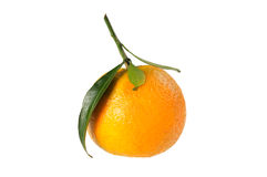 Tangerine on branch. Stock Image