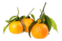 Tangerine on branch. Royalty Free Stock Photos