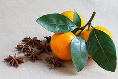 Tangerine branch and spiced star anis Royalty Free Stock Images