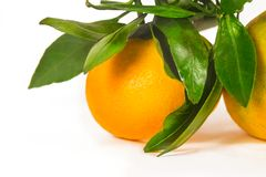 Tangerine on branch Stock Photo