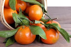 Tangerine clementine. Display in market place stock image