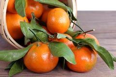 Tangerine clementine Stock Image