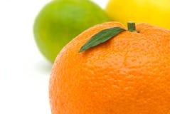 tangerine för leaf s Arkivfoton