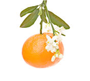 Tangerine with flowers. Isloated on white background Royalty Free Stock Photography