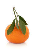 Tangerine Fruit with Leaf Sprig Stock Image