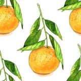 Tangerine fruit seamless pattern. Hand drawn watercolor tangerine fruit seamless pattern. Colored vector illustration over white vector illustration