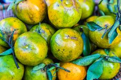 The tangerine fruit is a sweet and sour taste. The tangerine fruit is a sweet and sour taste for sale Stock Images