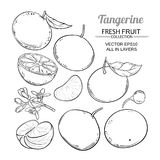 Tangerine fruit vector. Set on white backgroung royalty free illustration