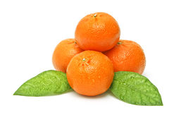 Tangerine fruits Stock Image