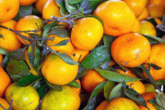 Tangerine fruits close up Stock Image