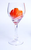 Tangerine in glass stock photography