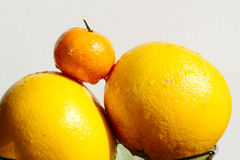Tangerine and grapefruit Royalty Free Stock Photos