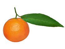Tangerine with green leaf Stock Images