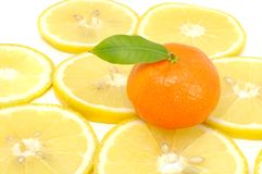 Tangerine with Green Leaf on Lemon Slices Stock Photography
