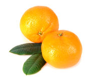 Tangerine with green leaves Royalty Free Stock Images