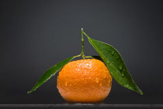 Tangerine with green leaves on gray background Stock Images