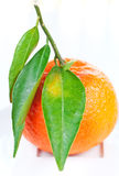 Tangerine with green leaves on a plate Royalty Free Stock Photos