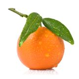Tangerine with green leaves and water drops Stock Photos