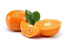 Tangerine grupa obraz royalty free