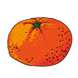 Tangerine hand drawn fruits isolated  Stock Images