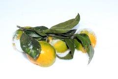 Tangerine Royalty Free Stock Photo