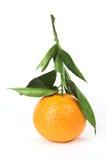 Tangerine, haste com folhas Imagem de Stock