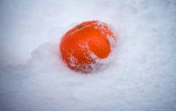 Tangerine im Schnee, Zitrusfrucht, einfrierender Tag, Mandarine fiel in den Schnee lizenzfreies stockbild