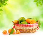 Tangerine inside basket with clipping path - 2 Stock Photos