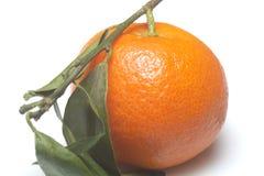 Tangerine isolated royalty free stock photo