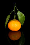 Tangerine isolated on black Royalty Free Stock Images