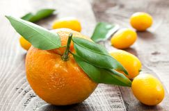 Tangerine and kumquats Stock Photography