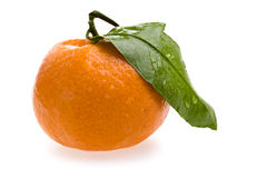 Tangerine with Leaf and Dew Royalty Free Stock Photography