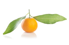 Tangerine with leaves Stock Photography