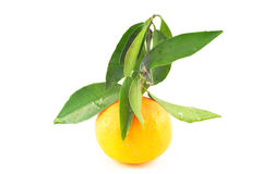Tangerine with leaves on a white background Stock Image