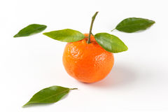 Tangerine with leaves Royalty Free Stock Photo