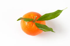 Tangerine with leaves Stock Image