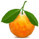 Tangerine with leaves on white background. Digital drawing vector illustration